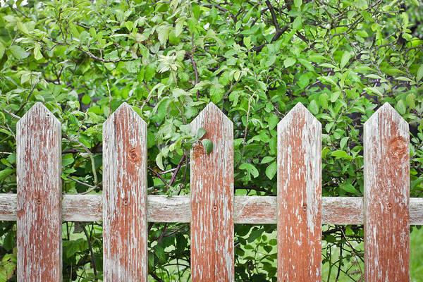 Brown Wall Art - Photograph - Picket Fence by Tom Gowanlock