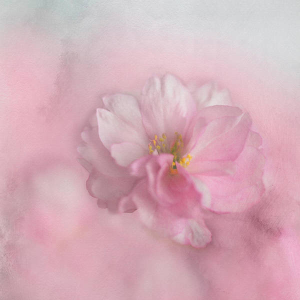 Photograph - Pink Blossom by Annie Snel