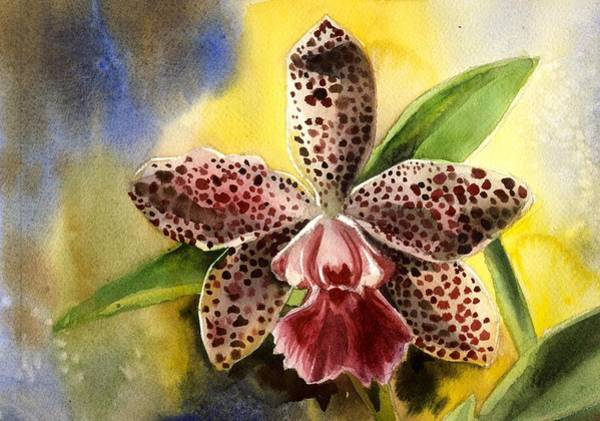 Painting - Pink Cattleya Orchid by Alfred Ng