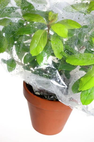 Demonstrating Wall Art - Photograph - Plant Transpiration by Cordelia Molloy