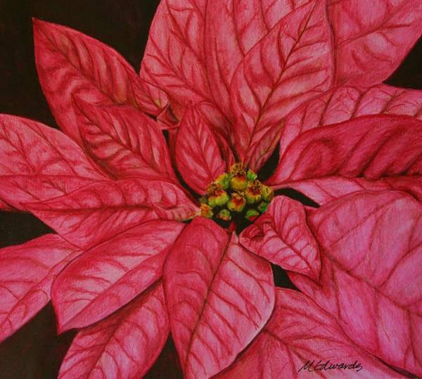 Floral Watercolor Drawing - Poinsettia by Marna Edwards Flavell