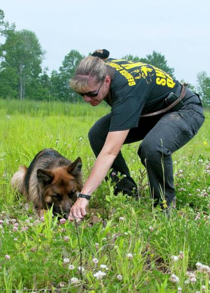 Dog Training Photograph - Police Dog Training by Louise Murray/science Photo Library