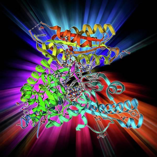 Adenosine Triphosphate Wall Art - Photograph - Polya Polymerase And Rna by Laguna Design