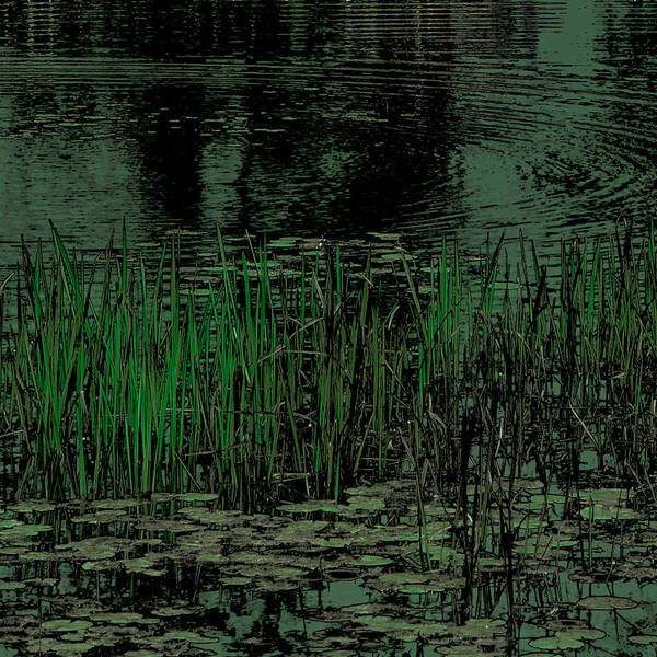 Photograph - Pond Grasses by David Patterson