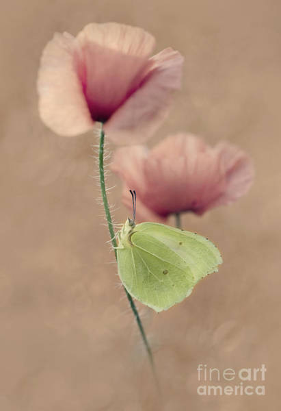 Nature Wall Art - Photograph - Poppies by Jaroslaw Blaminsky