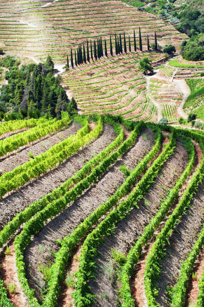 Douro Wall Art - Photograph - Portugal, Douro Valley, Terraced by Terry Eggers
