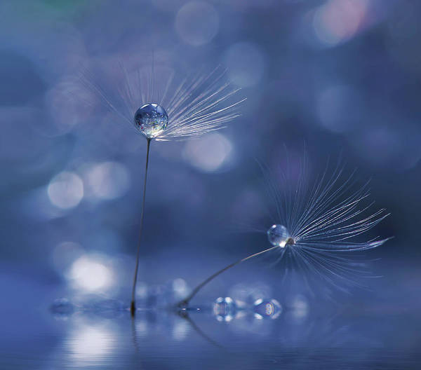 Drop Photograph - Prism Of Life... by Juliana Nan