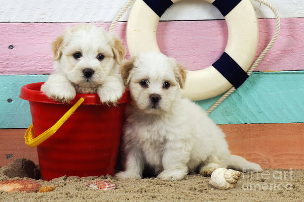 Wall Art - Photograph - Puppy Dogs At The Beach by John Daniels