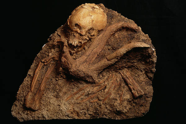 Wall Art - Photograph - Qafzeh Human Remains by Pascal Goetgheluck/science Photo Library