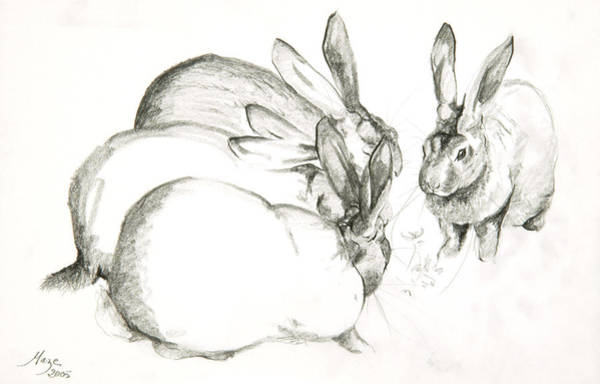 Shadows Drawing - Rabbits by Jeanne Maze