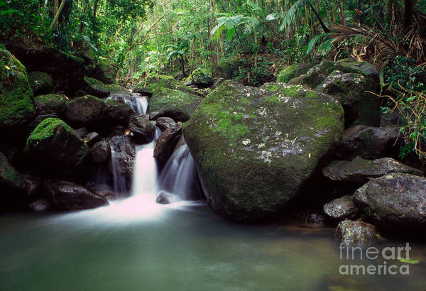 Photograph - Rainforest Waterfall by Thomas R Fletcher