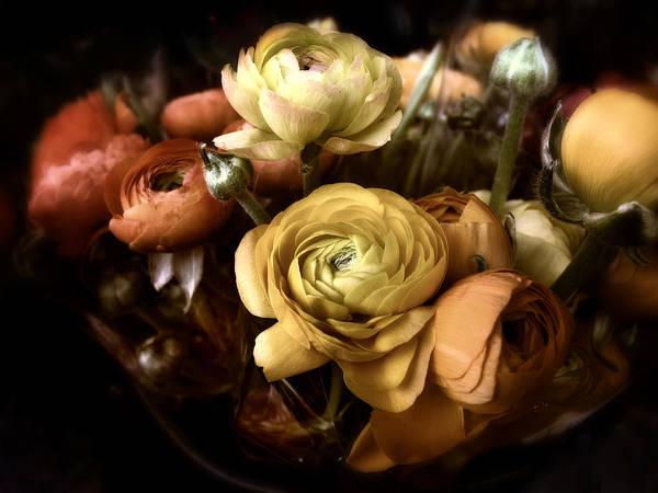 Ranunculus Photograph - Ranunculus by Jessica Jenney