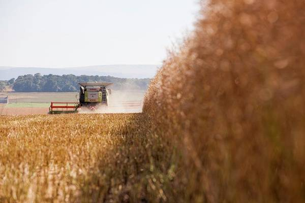 Wall Art - Photograph - Rapeseed Harvesting by Lewis Houghton/science Photo Library