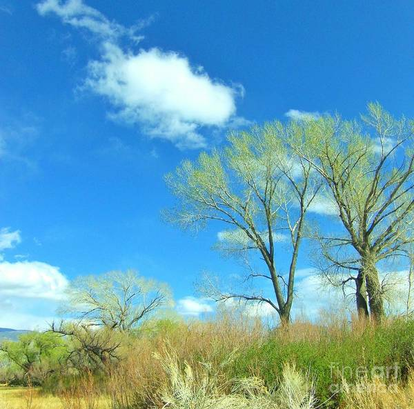 Bishop Hill Photograph - Reaching by Marilyn Diaz