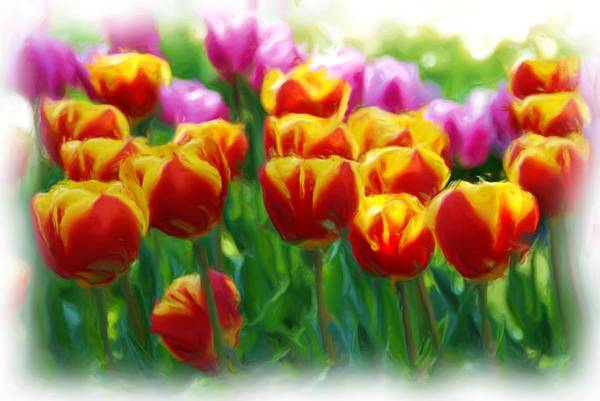 Calla Mixed Media - Red And Yellow Tulips by Allen Beatty