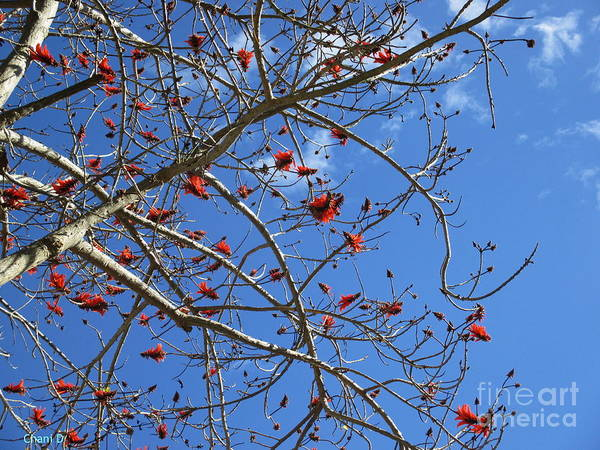 Photograph - Red Beauty by Chani Demuijlder