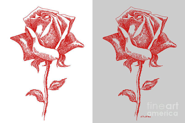Warhol Drawing - 2 Red Roses Poster by Gordon Punt