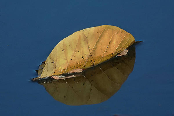Photograph - Reflection Of Fall by Gary Slawsky
