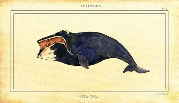 Wall Art - Digital Art - Right Whale by Juan  Bosco