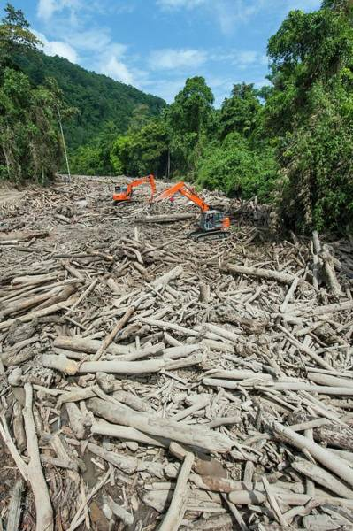 Excavator Photograph - River Full Of Trees After Landslid by Scubazoo