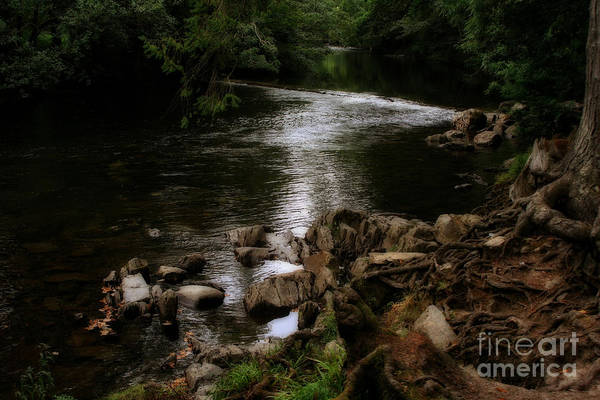 Photograph - River In The Black Forest by Doc Braham