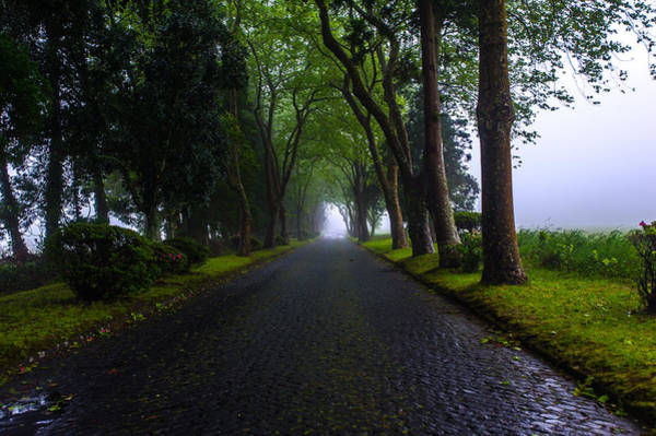 Photograph - Road Of Trees by Joseph Amaral