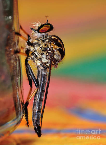 Ugly Photograph - Robber Fly by Kaye Menner