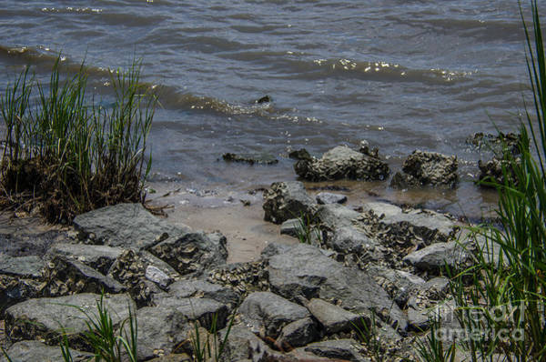 Photograph - Rocky Shore by Dale Powell