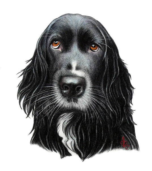 Mutt Drawing - Rummy by Danielle R T Haney