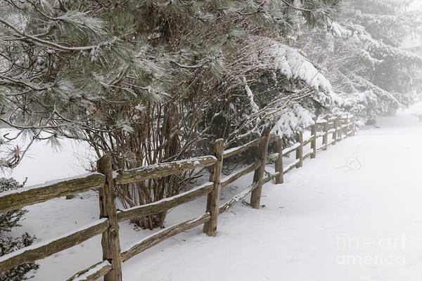 Photograph - Rural Winter Scene With Fence by Elena Elisseeva