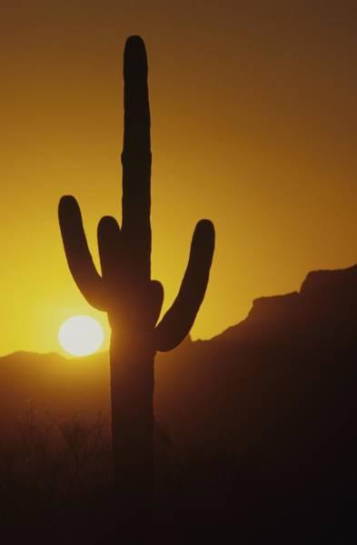 Photograph - Saguaro Cactus And Sunset by Don Kreuter