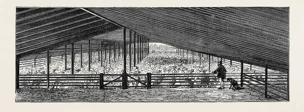 New South Wales Drawing - Scene At An Australian Sheep Station, Collaroy by Australian School