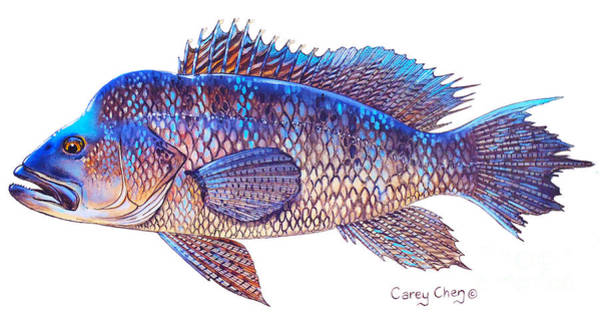 Mako Painting - Sea Bass by Carey Chen