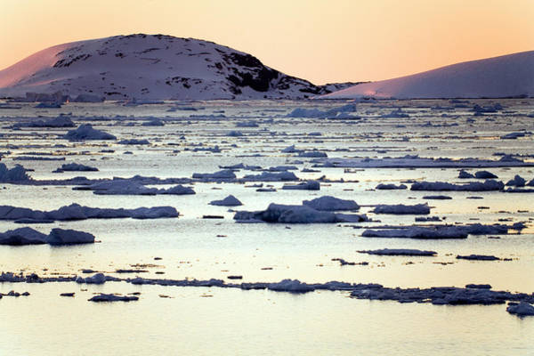 Channel Islands Photograph - Sea Ice by Steve Allen/science Photo Library