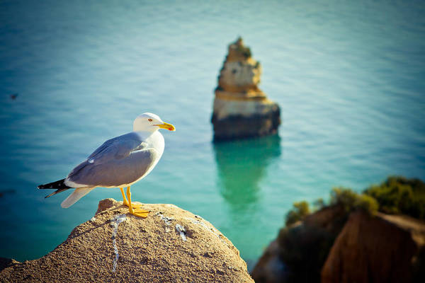 Seagull On The Rock Art Print