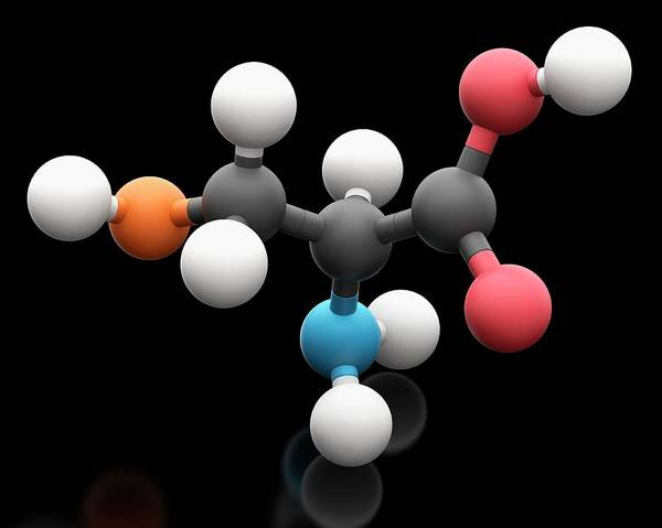 Wall Art - Photograph - Selenocysteine Amino Acid Molecule by Carlos Clarivan/science Photo Library