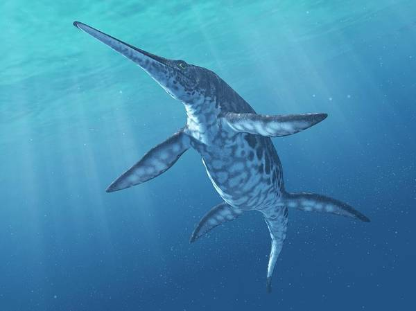 Palaeozoology Wall Art - Photograph - Shonisaurus Marine Reptile by Sciepro/science Photo Library
