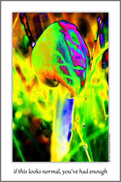 Photograph - Shroooms by  Onyonet  Photo Studios