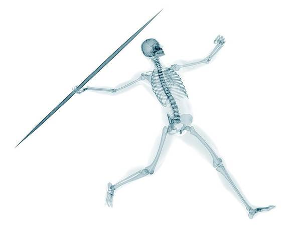 Javelin Photograph - Skeleton Throwing Javelin by Sciepro/science Photo Library