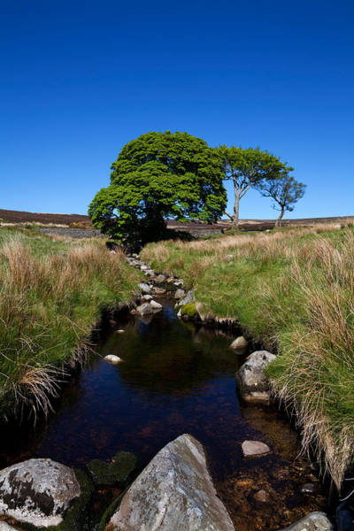 Moorland Photograph - Small Group Of Trees, East Kippure by Panoramic Images