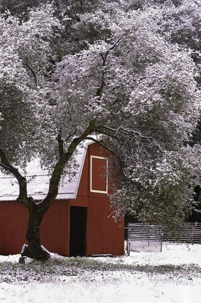 Photograph - Snowy Red Barn by Sherri Meyer