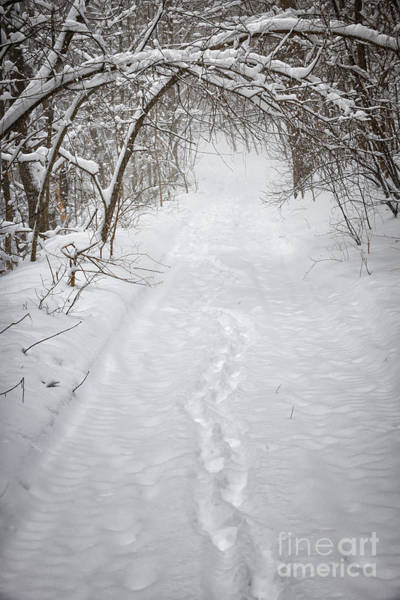 Wall Art - Photograph - Snowy Winter Path In Forest by Elena Elisseeva