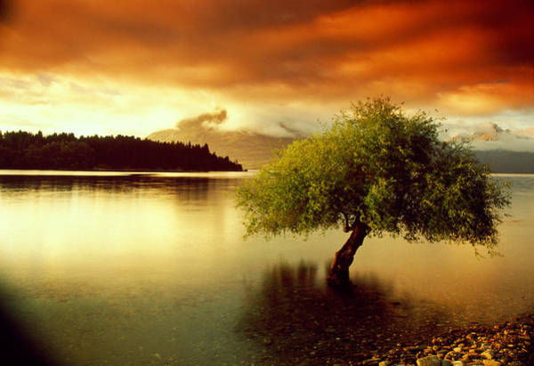 Drown Photograph - South Island New Zealand by Panoramic Images