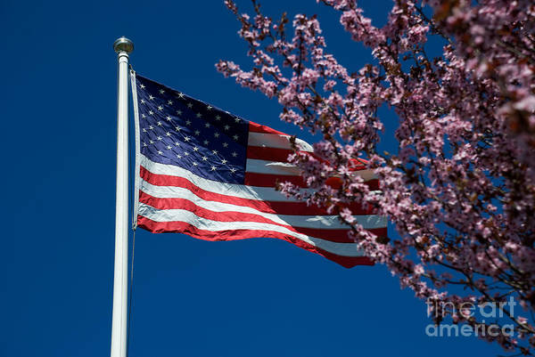 Photograph - Spring Flag by Mark Dodd