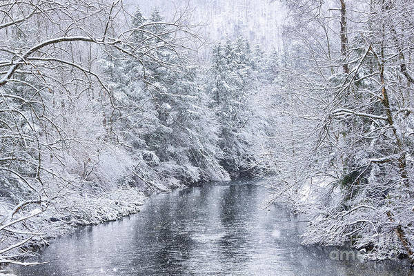 Photograph - Spring Snow Along Gauley River by Thomas R Fletcher
