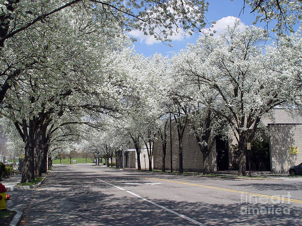 Photograph - Springtime Corning Ny 1 by Tom Doud