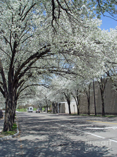 Photograph - Springtime Corning Ny 3 by Tom Doud