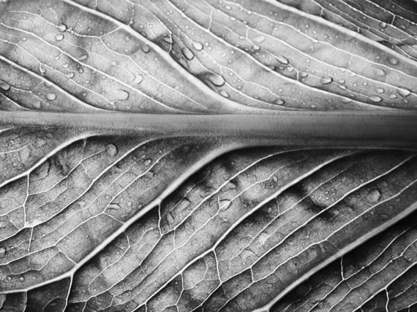 Forest Spirit Wall Art - Photograph - Streamlined by Tom Druin
