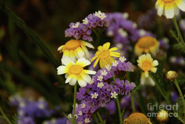Photograph - Summer Love by Linda Shafer