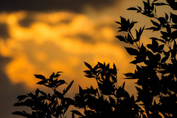 Photograph - Fire In The Sky by Colleen Coccia